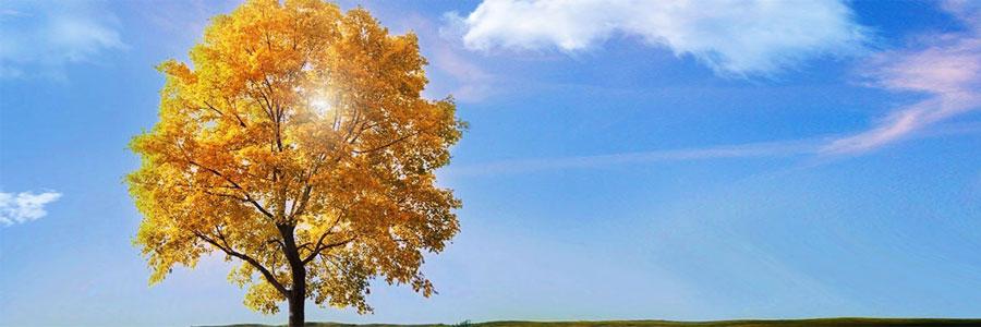 l'arbre, symbole de outil de mon accompagnement